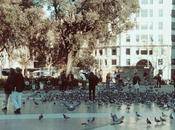 incapacidad laboral ocasionada heces palomas