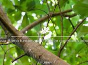 Ecosia. Cómo funciona buscador planta árboles