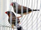 Cuento nido recién pintado