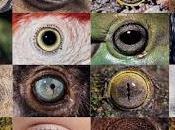 Darwin: creacionismo refutado Darwin