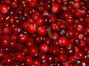 Cranberries. bayas sanas energéticas