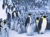 ¿Aprenderemos pingüinos controlar tráfico?