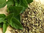 producto herbolario: Orégano