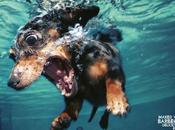 Publicidad creativa XIX: anuncios ingeniosos protagonizados animales