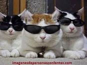 Imagenes graciosas lentes gafas chistosas mujeres