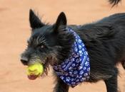 #Perritos abandonados convierten recogepelotas Abierto Tenis #Brasil #Mascotas #Animales