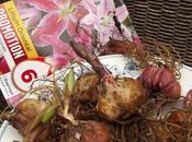 Bulbos Lilium orientales (azucenas)