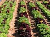 agricultura desarrollo sostenible