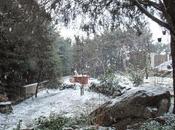 Agenda jardín invierno (Diciembre, enero febrero)