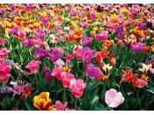 Camino primavera