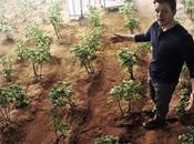 puede cultivar papas Marte prueba científica