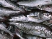 pescado, bueno sobre habilidades cognitivas adultos