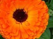 Flores huerto: menos plagas cosechas