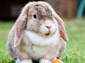 Aprende Todo Acerca Esterilización Conejos. ¿Qué Esperar Cirugía?