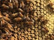 Apicultura urbana???? beekeeping urban ????