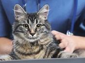 Como Podemos Saber Nuestro Gato Presenta Lombrices. Aprende Revisar Mascota.