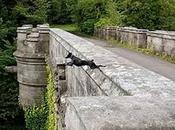 puente perros suicidas