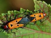 Insectos Jardines