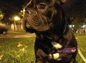 Adopta bulldog: caso Allen