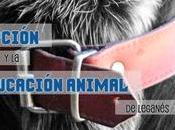 festival adopción educación animal Leganés. Junio