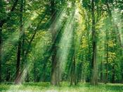 ¿Recordamos importancia bosques nuestra vida?