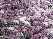 Nieve primaveral