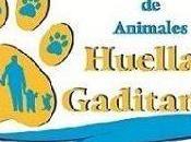 Asociación Huellas Gaditanas Protectora animales