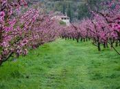despertar primavera GR-99, Camino Natural Ebro
