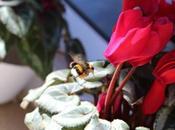 Proyecto fotográfico ed.): Flores
