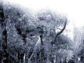claro bosque Marisa Madieri