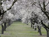 Primavera Quinta Molinos