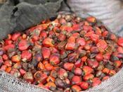 Aceite palma: vegetal graso consumido planeta