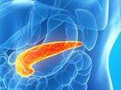 Función páncreas