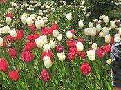 Plan Recomendado: Florecer Tulipanes Real Jardín Botánico Madrid