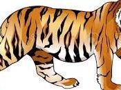 tigre ante conflicto
