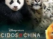 Reseña Nacidos China, nuevo documental Disney Nature