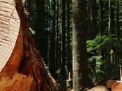 importancia tiene certificación madera