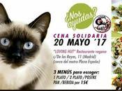 "Cena solidaria para Albergue Gatos ""Con Gato"". Mayo."