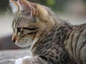 Roña Gatos, Como Podemos Saber Nuestra Mascota Tiene Sarna.