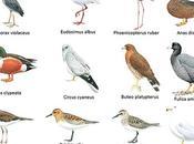 Observando aves Cuba