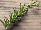 plantas ayudarán mejorar memoria