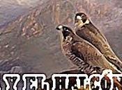 águila halcón