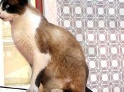 Proyecto Fotográfico Gato