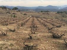 copa boca: Viña Marisa 2014. Crowdfunding para salvar viña.
