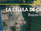 Poesía Norteamericana (86): Sharon Olds: célula (1):