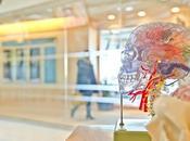 Alimentación sistema nervioso