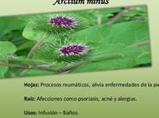 Bardana planta depurativa cuida piel