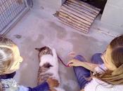 mañana cuentos L'Associació d'Amics dels Animals Maresme
