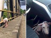 Esta perrita abandonada, cambia vida cuando sube auto