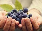 Diferencias vinos orgánicos, biodinámicos naturales
